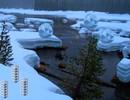 Alaskan Winter Forest