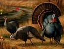 Wanna Wild Turkey