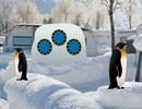 Penguin Snow Land
