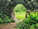 Predatory Garden